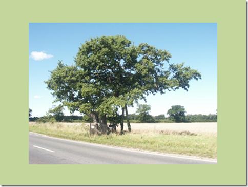 Kett S Oak